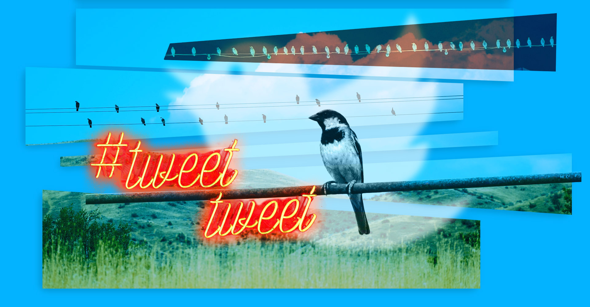 What Twitter Knows About You | Avast